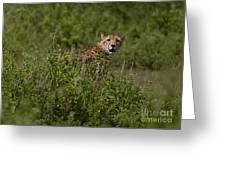 Cheetah   #0093 Greeting Card