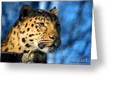 Cheetah Acinonyx Jubatus Greeting Card