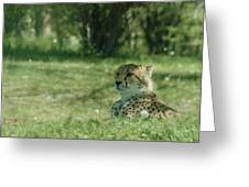 Cheetah At Attention Greeting Card