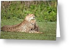 Cheetah Cub Acinonyx Jubatus Playing Greeting Card