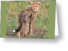 Cheetah Cub Looking Your Way Greeting Card