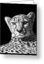 Cheetah In Black And White Greeting Card