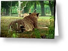 Cheetah Lunch-87 Greeting Card