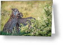 Cheetah Mother And Son Greeting Card
