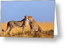 Cheetah Mother With Daughter Masai Mara Greeting Card