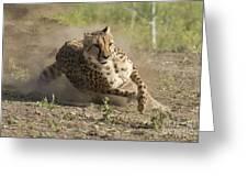 Cheetah Run 2 Greeting Card