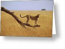 Cheetah Standing On Dead Tree Greeting Card