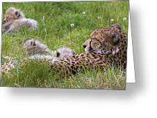 Cheetah With Cubs Greeting Card
