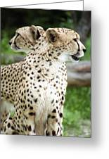 Cheetah's 04 Greeting Card