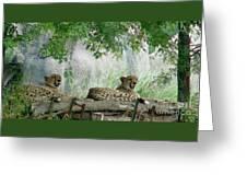 Cheetahs-120 Greeting Card