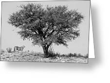 Cheetahs And A Tree Greeting Card