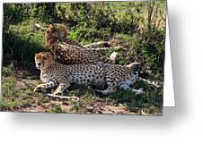 Cheetahs Of The Masai Mara Greeting Card