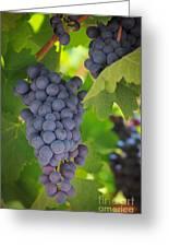 Chelan Blue Grapes Greeting Card