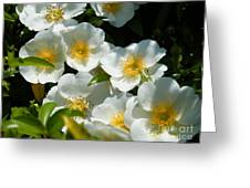 Cherokee Rose 2011 Greeting Card