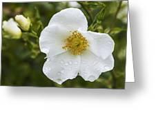 Cherokee Rose With Rain Drops Greeting Card