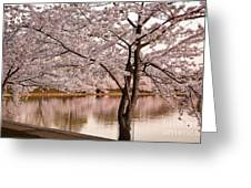 Cherry Basin Greeting Card