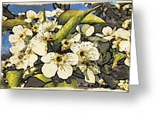Cherry Blooms Greeting Card