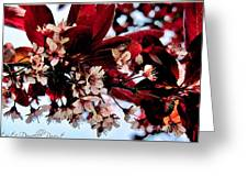 Cherry Blosoms 2 Greeting Card