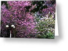 Cherry Blossom 3 Greeting Card