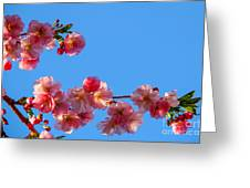 Cherry Blossom Against Blue Sky Greeting Card