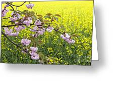Cherry Blossom And Rapeseed Greeting Card