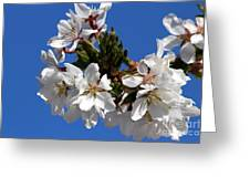 Cherry Blossom Blue Sky - 1 Greeting Card