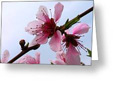 Cherry Blossom Greeting Card by Camille Lopez
