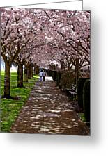 Cherry Blossom Friends Greeting Card