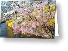 Cherry Blossom Land Greeting Card