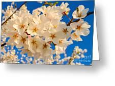 Cherry Blossom Macro Greeting Card