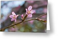 Cherry Blossom Pair Greeting Card