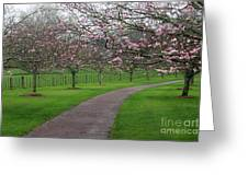 Cherry Blossom Path Greeting Card