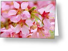 Cherry Blossom Special II Greeting Card