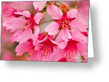 Cherry Blossom Special Greeting Card
