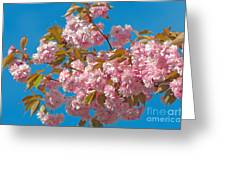 Cherry Blossoms 2 Greeting Card