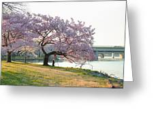 Cherry Blossoms 2013 - 003 Greeting Card