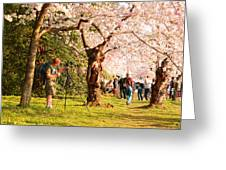 Cherry Blossoms 2013 - 009 Greeting Card