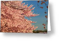 Cherry Blossoms 2013 - 013 Greeting Card