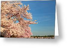 Cherry Blossoms 2013 - 014 Greeting Card