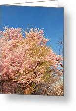 Cherry Blossoms 2013 - 016 Greeting Card