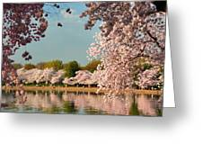 Cherry Blossoms 2013 - 023 Greeting Card