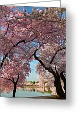 Cherry Blossoms 2013 - 024 Greeting Card