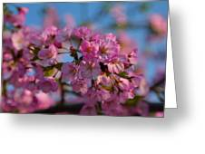 Cherry Blossoms 2013 - 031 Greeting Card