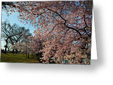 Cherry Blossoms 2013 - 038 Greeting Card