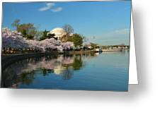 Cherry Blossoms 2013 - 041 Greeting Card