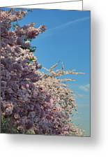 Cherry Blossoms 2013 - 046 Greeting Card