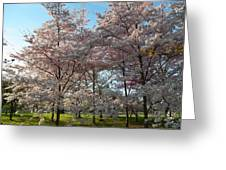 Cherry Blossoms 2013 - 049 Greeting Card by Metro DC Photography