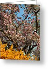 Cherry Blossoms 2013 - 051 Greeting Card