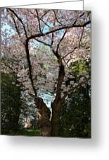 Cherry Blossoms 2013 - 056 Greeting Card