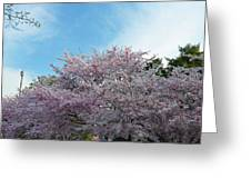 Cherry Blossoms 2013 - 070 Greeting Card by Metro DC Photography